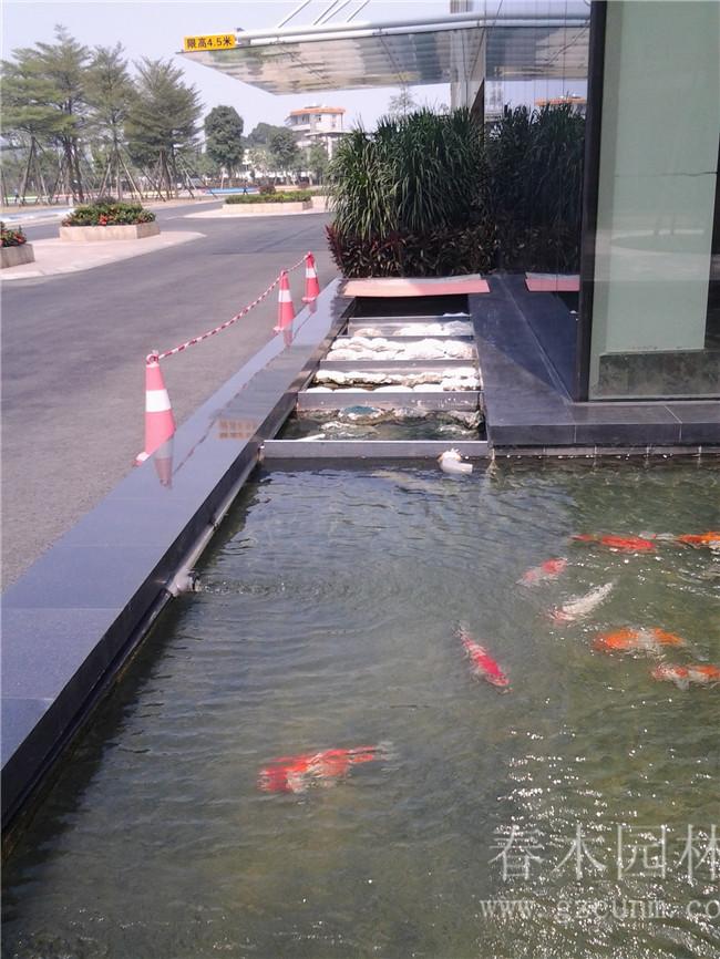 春木园林鱼池设计建造实现了 别墅花园鱼池, 庭院锦鲤鱼池,景观